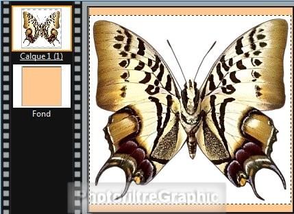 Ex 21 miroir et corne de l 39 image for Effet miroir photofiltre